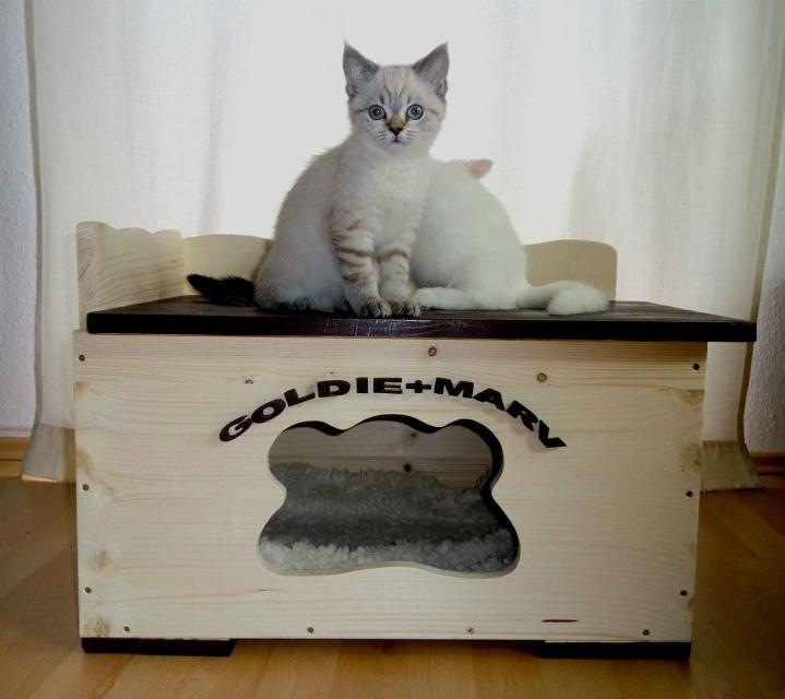 Katzenhaus Modell